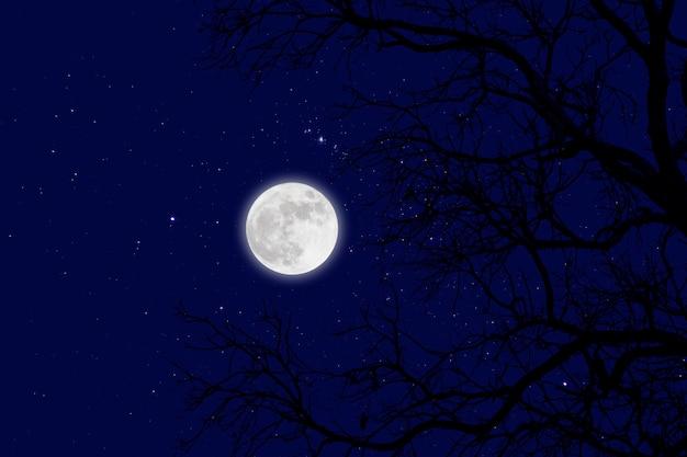 Luna llena y estrella con ramas muertas.