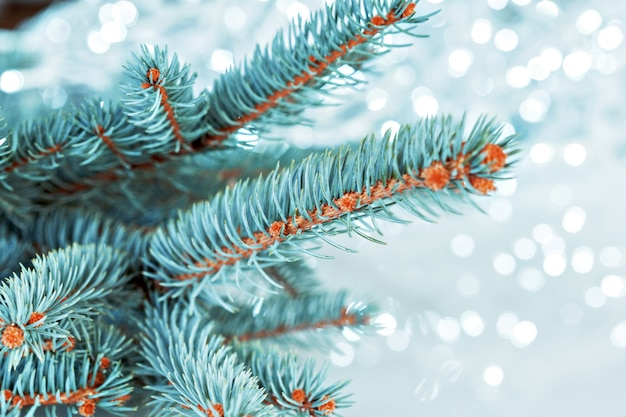 Luz del árbol de navidad