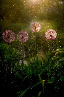 La luz del atardecer brilla sobre la hierba verde y las flores del campo