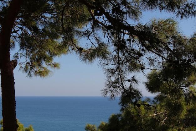 La luz del cielo y el mar a través de las ramas de abeto