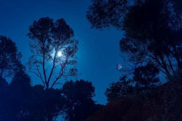 Luz de la luna detrás de un árbol alto