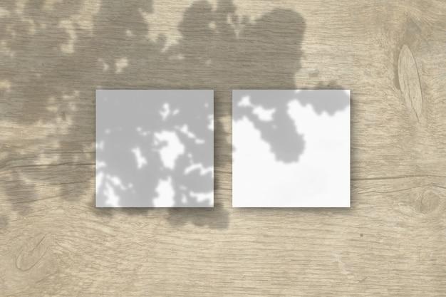 La luz natural proyecta sombras desde una rama