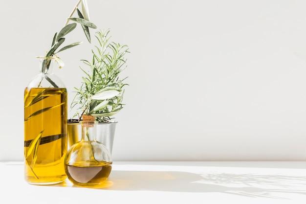 La luz del sol cae sobre botellas de aceite de oliva con romero en maceta