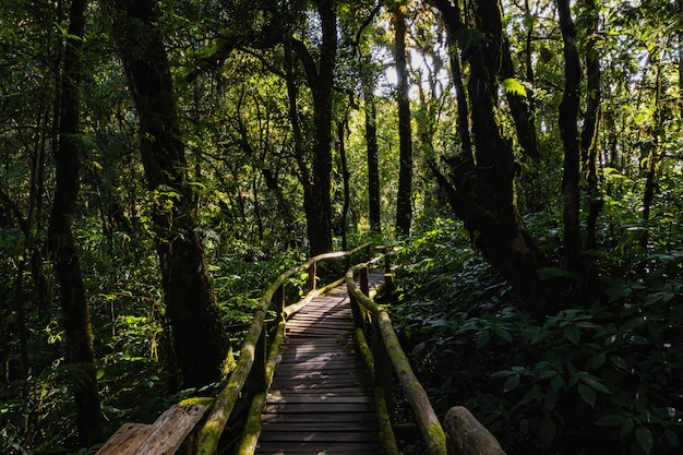 La luz y la sombra de la selva tropical en doi inthanon, chiang mai, tailandia
