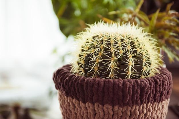 Maceta de cactus, maceta suculenta para decorativa en casa