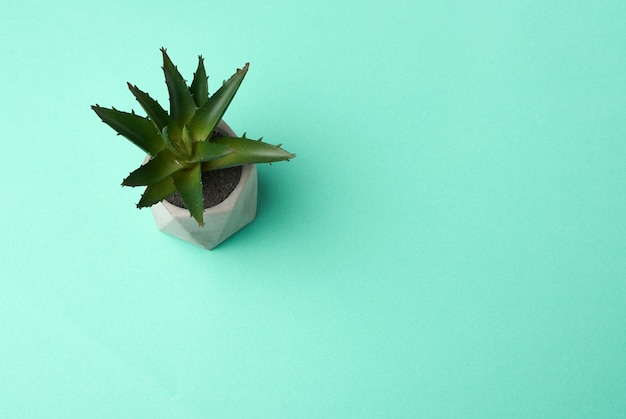 Maceta de cerámica con aloe en crecimiento sobre una superficie verde, vista superior