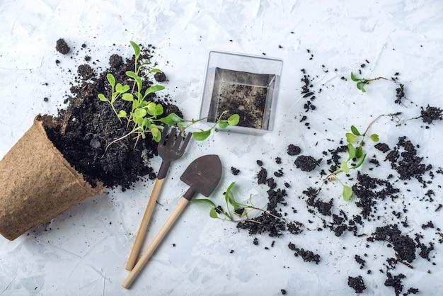 Maceta con tierra y brotes de plantas verdes flores