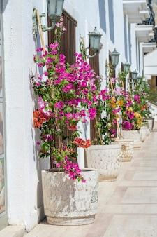 Macetas con flores decorativas brillantes cerca de la pared blanca en la calle ciudad de bodrum, turquía