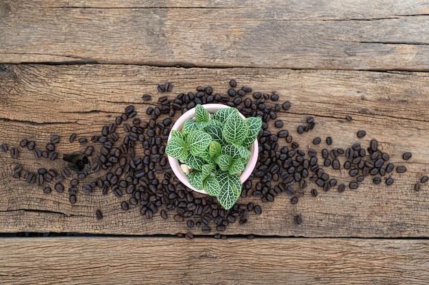 Macetas y granos de café en la vista superior de la mesa de madera