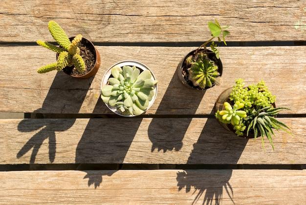 Macetas con plantas sobre fondo de madera