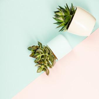 Macetas de plantas suculentas. lay flat