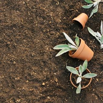 Macetas con plantas en el suelo.