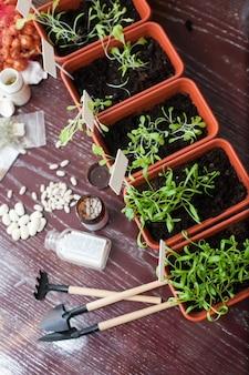 Macetas con plántulas de hierbas en la cocina de la casa