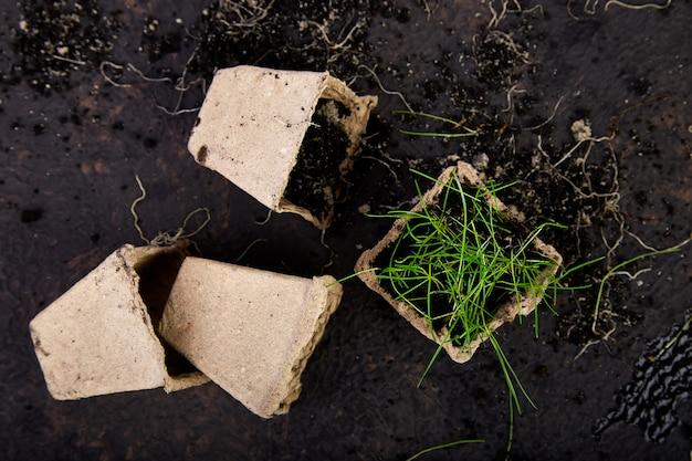 Macetas de turba con plántulas jóvenes, hierba en marrón