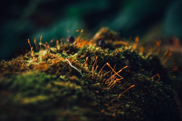 Macro de árbol de musgo