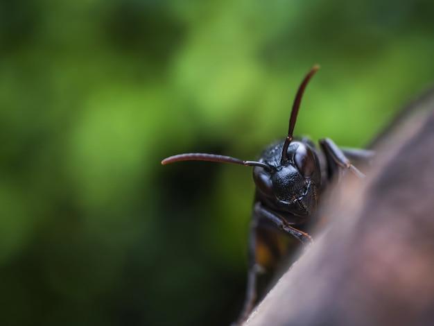 Macro cabeza avispa