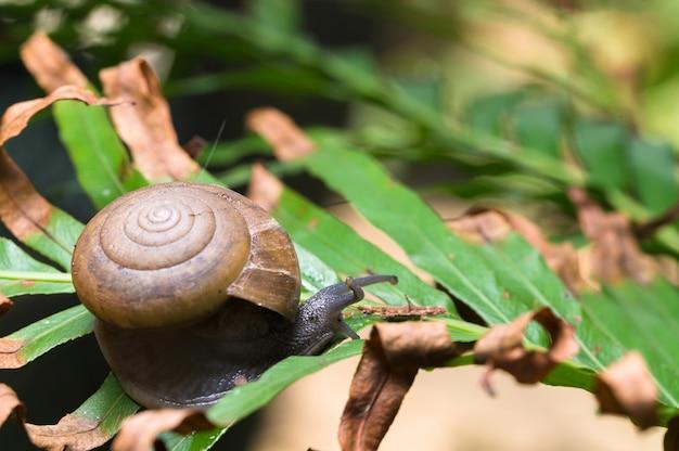 Macro de caracol en un árbol en la naturaleza