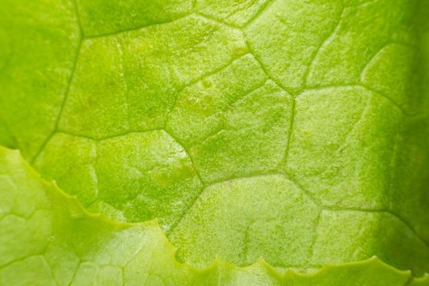 Macro del color verde de la superficie de la textura de la hoja de la planta en el uso de la naturaleza para el fondo