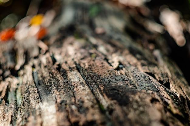 Macro de corteza de árbol