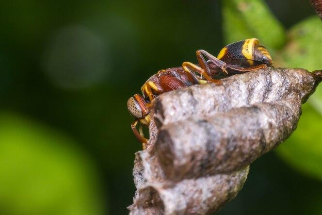 Macro de himenópteros en el nido en la naturaleza