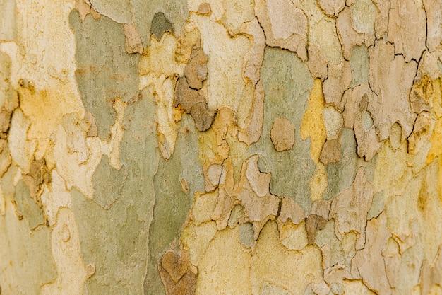 Macro disparó corteza de tronco de árbol viejo