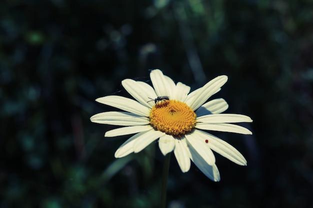 Macro de la flor de color ala de nadie