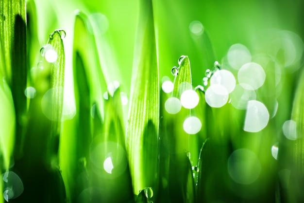 Macro. fondo, gotas de agua sobre la hierba verde.