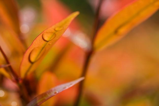 Macro de la gota de agua en las hojas en el fondo de la naturaleza del jardín