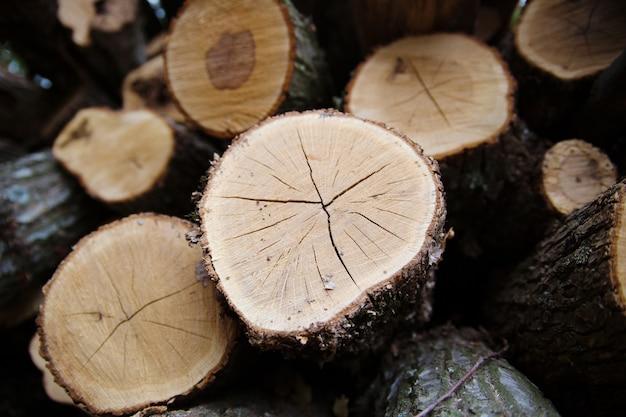 La madera cosechada en el invierno. primer plano de troncos.