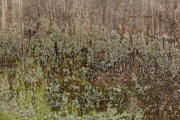 Madera envejecida con musgo superficial
