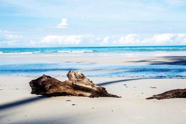 Madera en la playa.