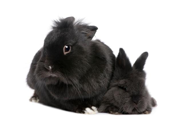 Madre conejo y su hijo en un blanco aislado