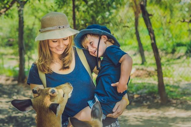 Madre e hijo alimentando hermosos ciervos de manos en un zoológico tropical