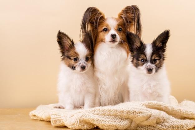 Madre perro con hijos