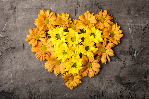 Magníficas flores de crisantemo en forma de corazón sobre un fondo oscuro