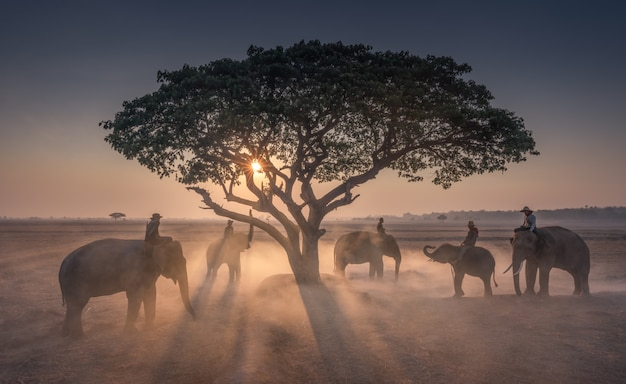 Mahout al atardecer con elefantes en tailandia