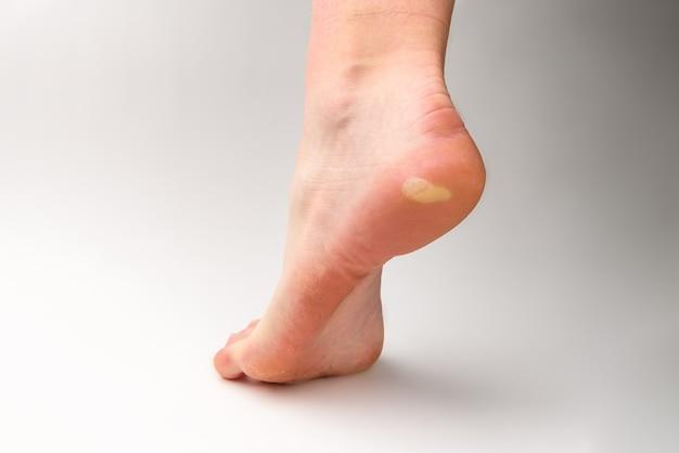 Maíz a pie sobre fondo gris