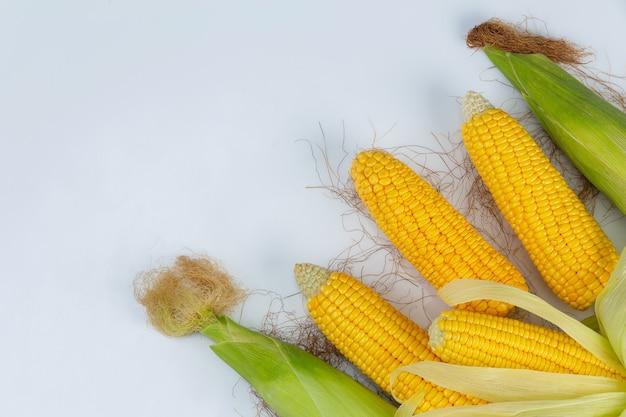 Maíz en la vaina aislada del campo de maíz en la pared blanca.