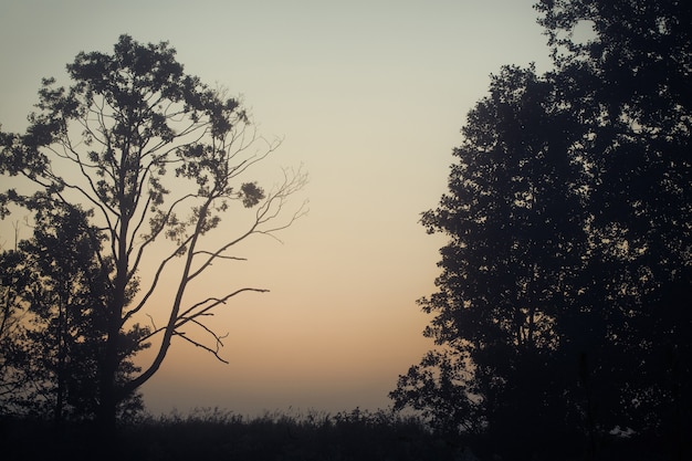 Majestad de la naturaleza, bosque brumoso al amanecer
