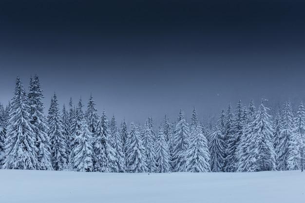 Majestuoso paisaje de invierno, bosque de pinos con árboles cubiertos de nieve.