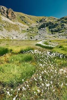 Majestuoso de un pequeño lago de montaña rodeado de pasto de algodón en el campo de la riviera francesa
