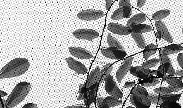 Malla de alambre con hiedra