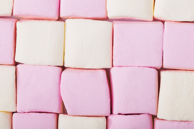 Malvavisco rosado y blanco