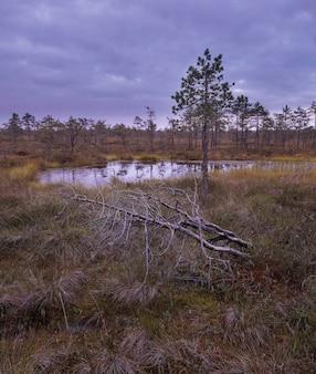 Mañana en un pantano del norte de otoño, reserva natural swamp ozernoye rusia región de leningrado