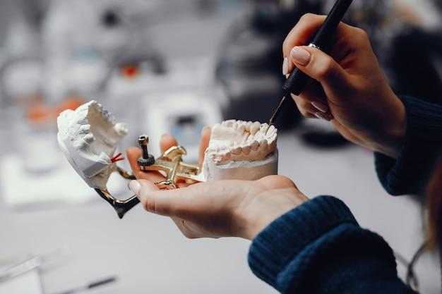 Mandíbula artificial en el consultorio del dentista.