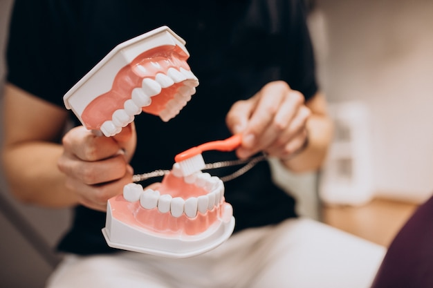 Mandíbula de plástico en una clínica de odontología