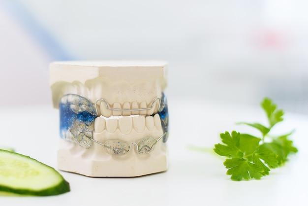 Mandíbulas de cerámica con una grapa de mentira con rodajas de pepino
