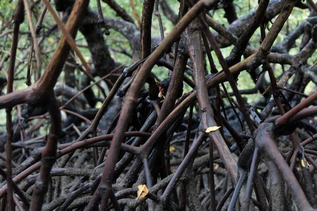 Manglar tropical natural con raíces.