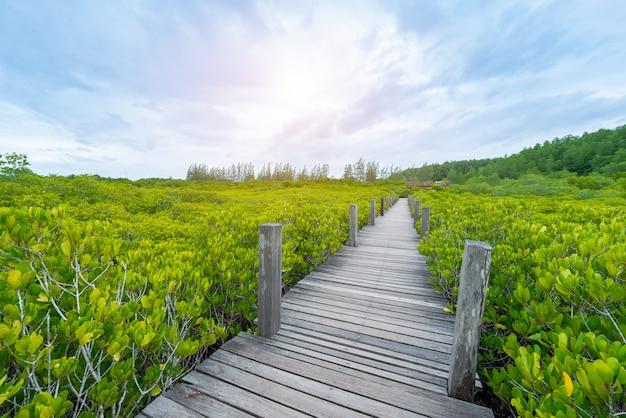Manglares intung prong thong o golden mangrove field en el estuario pra sae, rayong, tailandia