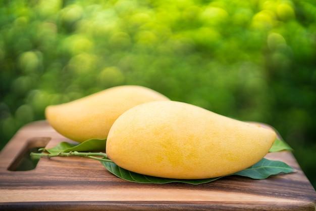 Mango dulce dorado en jardín verde mango barracuda con hoja verde.
